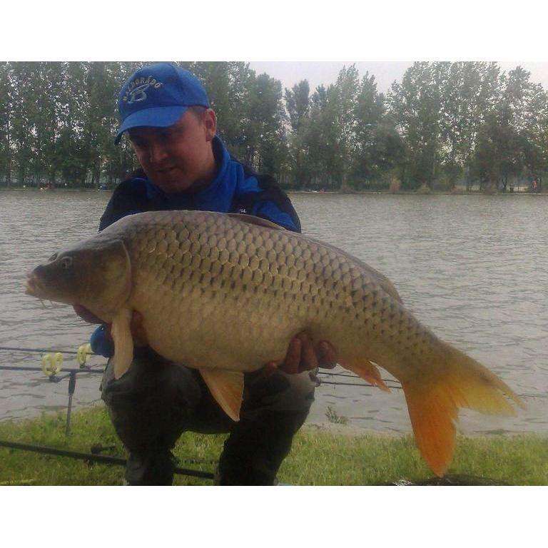 10,72 kg