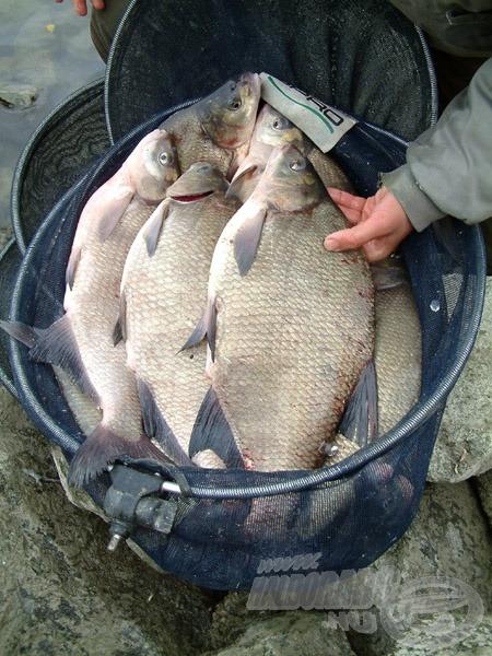 Döbbenetes méretű és mennyiségű hal került szákba. Feri kizárólag dévérkeszegeket fogott, míg a körülötte horgászók márnát