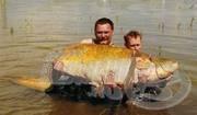 112 kilós rekordharcsa Magyarországon!