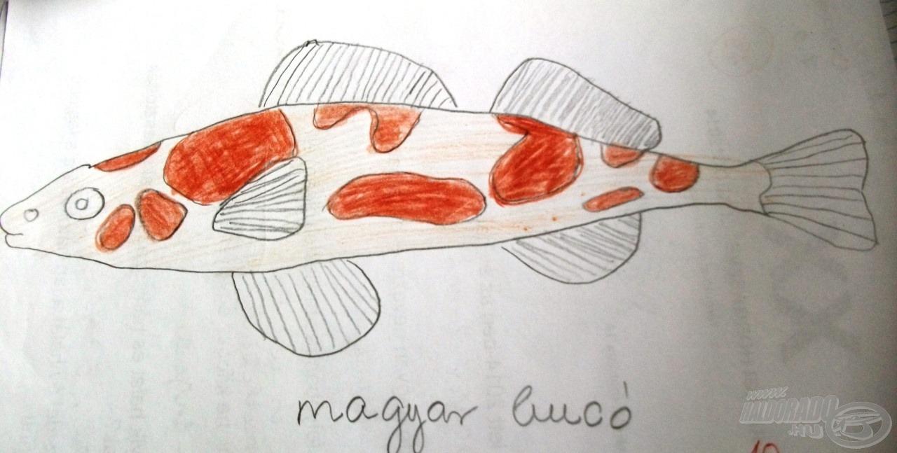 Az alig-alig ismert halfaj, a magyar bucó most már mindenki számára kedves ismerős lett