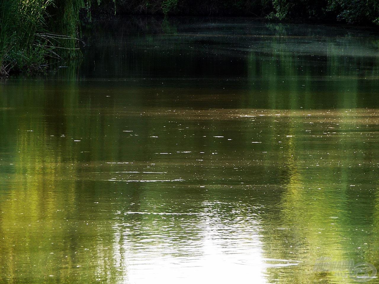 Jól látszik a vízfelszínen összegyűlt, sok bosszúságot okozó nyárfapihe