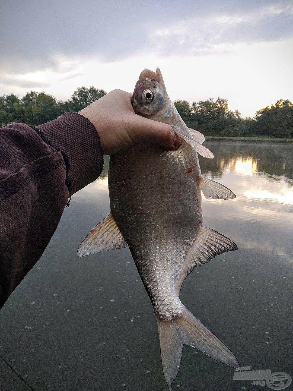Ilyen és hasonló halak voltak az első jelentkezők, amelyek végigkísérték a napot