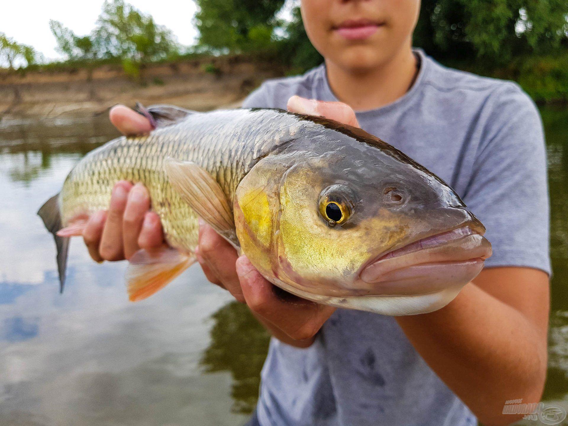 Gyönyörű hal!