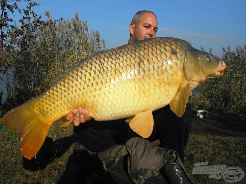A bentai tórekord aranysárga őszi színben: 18,40 kg