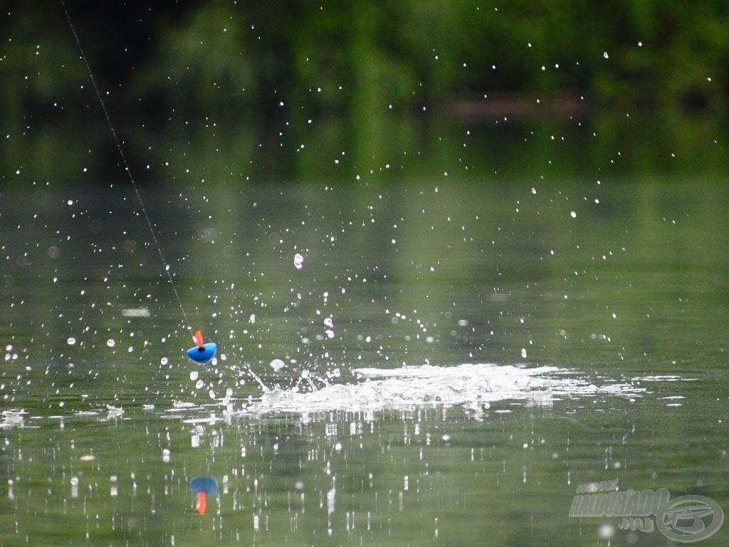… és a következő pillanatban már merül is az úszó, jöhet a bevágás!