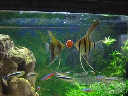 Alaposan megfigyelhetjük halainkat…