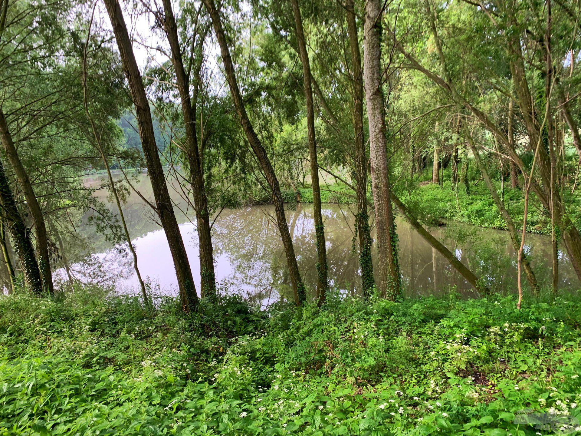 A tó egyik csücske egy kis öböllé válik