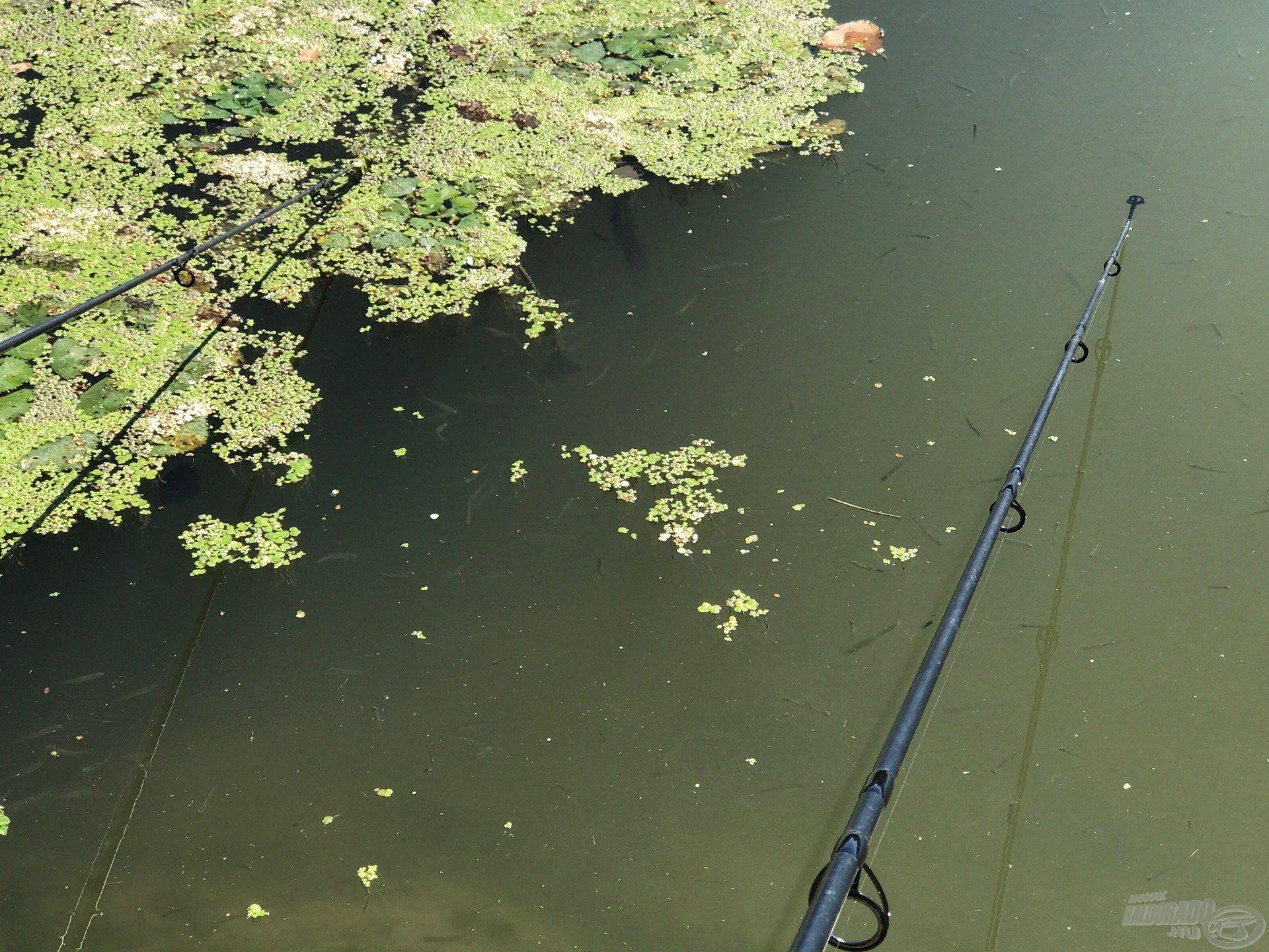 A vízi forgalom miatt a spicceket a víz felszíne alá engedtem
