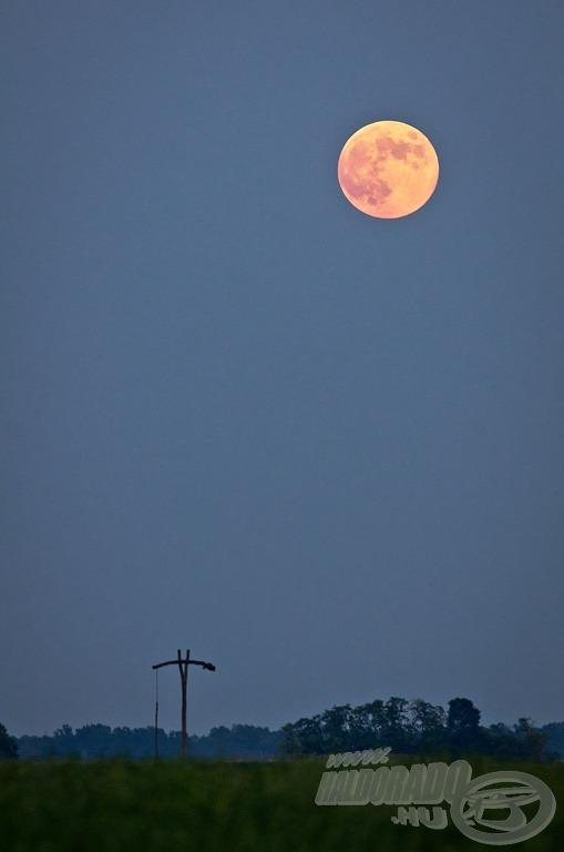 Vörös holdkelte