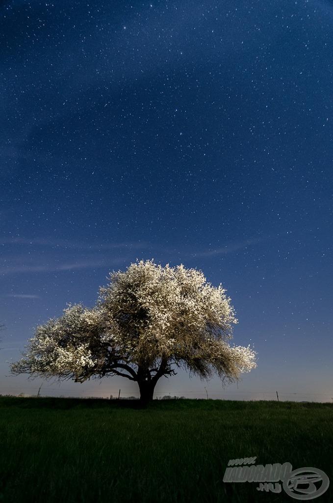 A vén körtefa is fehér ruhát öltött