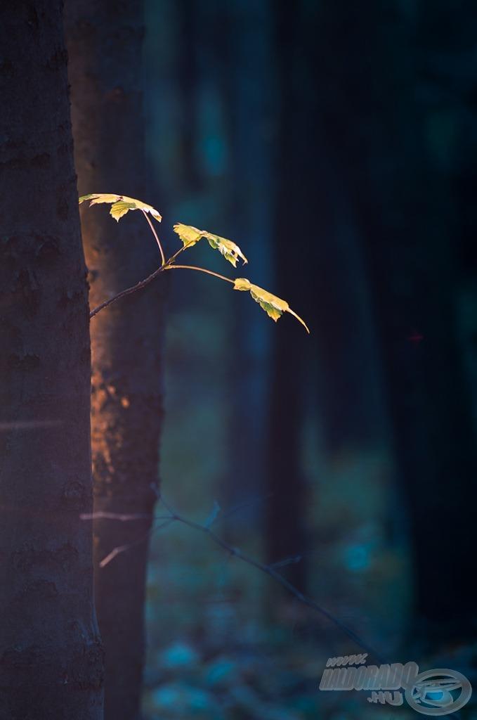 Hűvös erdőben
