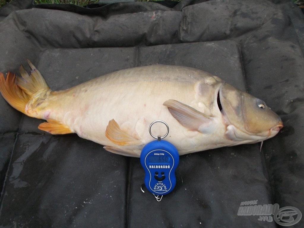 A matracon pihen a szép tükrös, 6,50 kg a pontos súlya