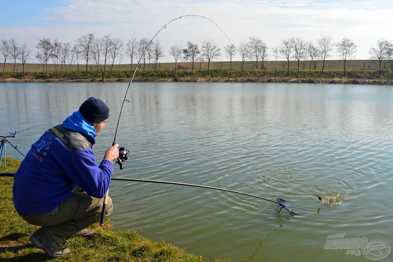 Az átlag méretű pontyok horgászata is élvezetes ezzel a bottal