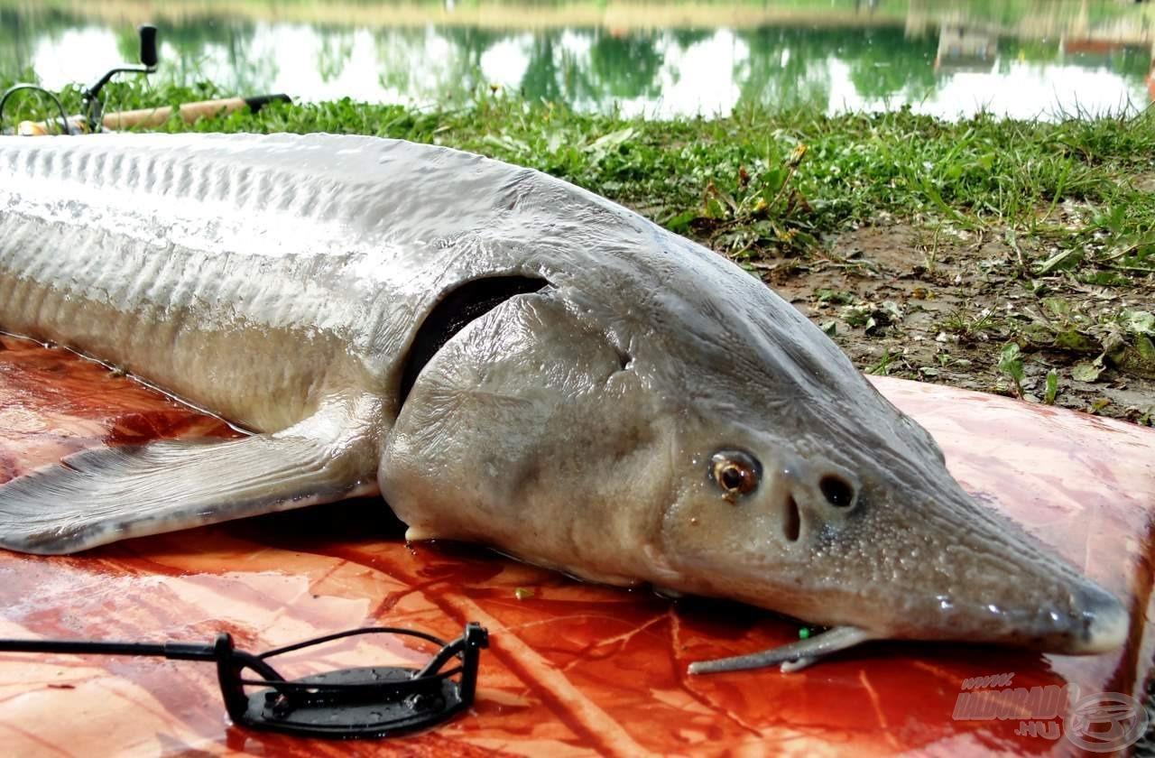 A matrac minden horgász felszerelésében helyet kéne, hogy kapjon