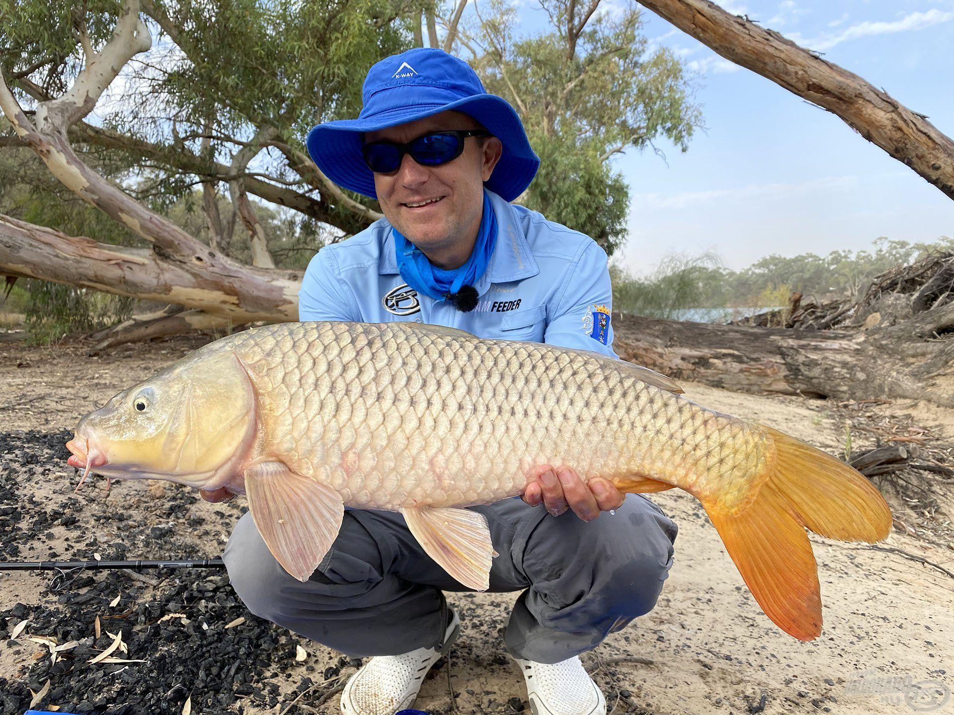 Erős, vad nyurgapontyok lakják a Murray folyót