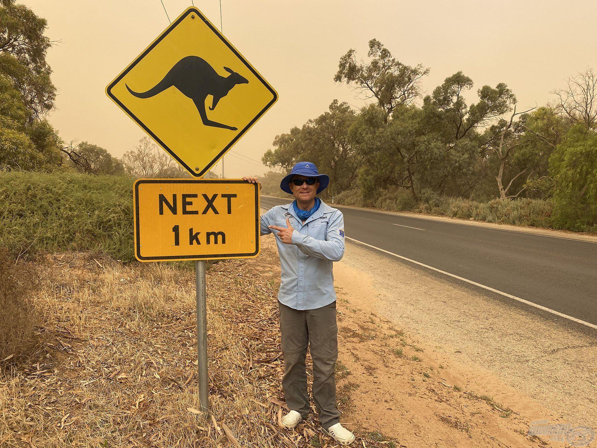 Vigyázat, itt nem őzek, hanem kenguruk ugrándoznak az út mentén!