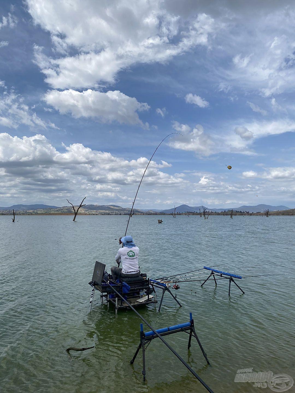 A jó megoldást a partközeli (15 méterre történő), nagy kosaras horgászat jelentette