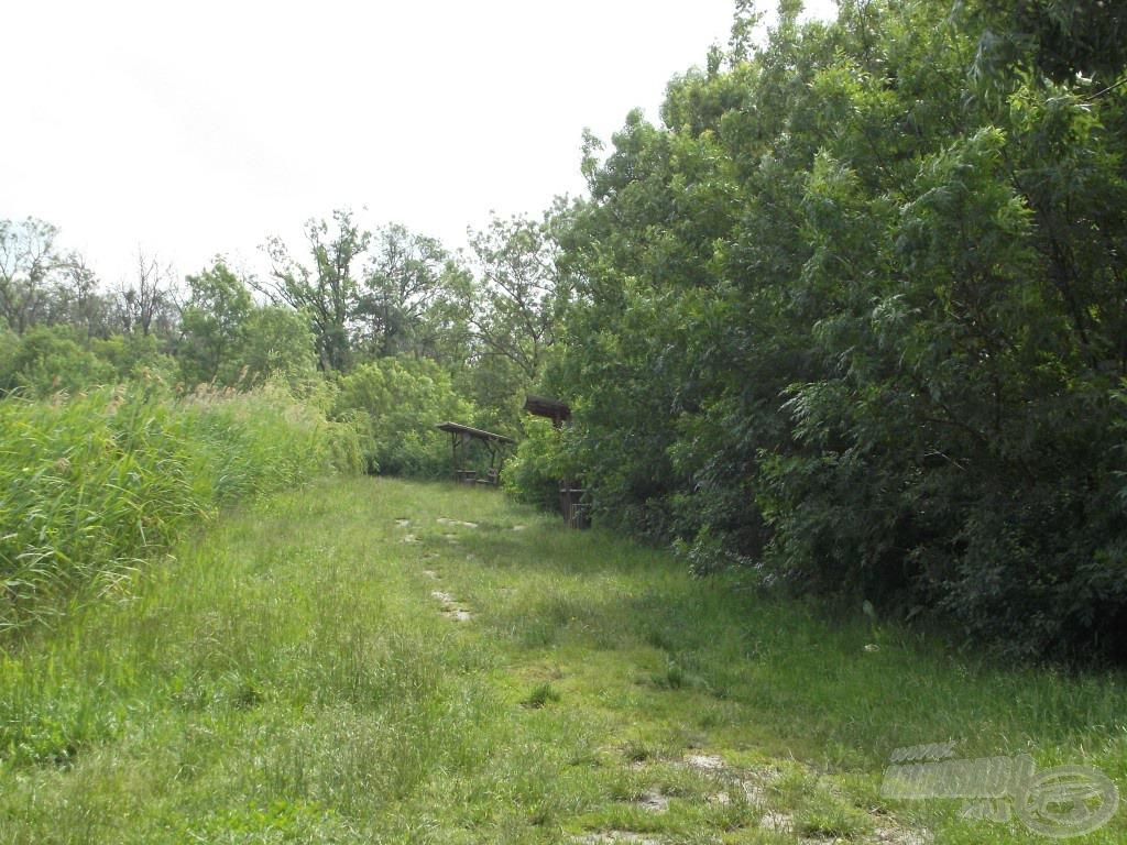 """A tavat """"körbeöleli"""" a kis erdő, ami amellett, hogy árnyékot ad, rendkívül hangulatos is"""