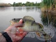 A Sügér horgászata 1.