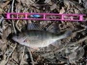 A sügér horgászata 8.