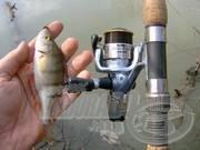 A sügér horgászata 9.