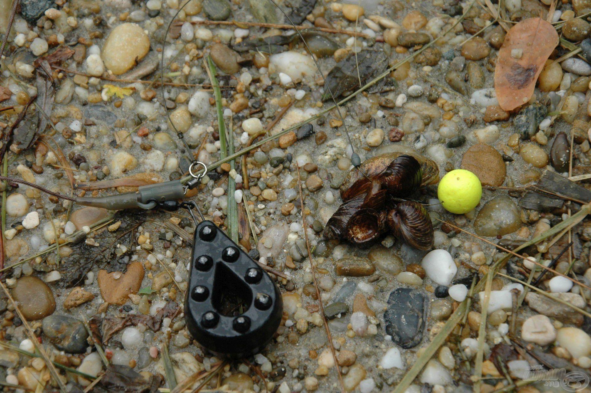 Érdemes 6-8 óránként frissíteni a kagylók miatt is, az áramló vízben a hosszabb előke könnyen bekerülhet az aljzatot borító kagylók közé, ami ellehetetleníti a horgászatot