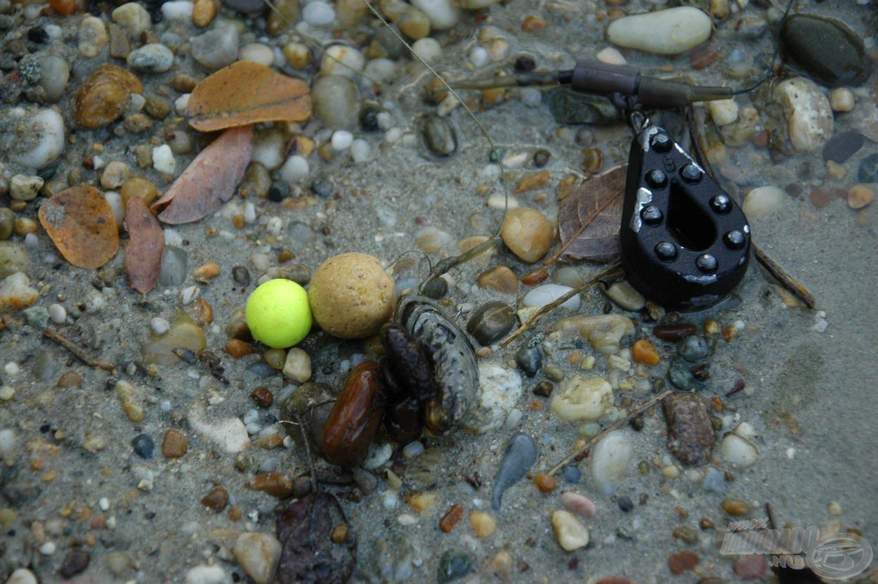 A kagylók hatalmas tömegben voltak jelen az aljzaton és sokszor a szereléken, zsinóron is