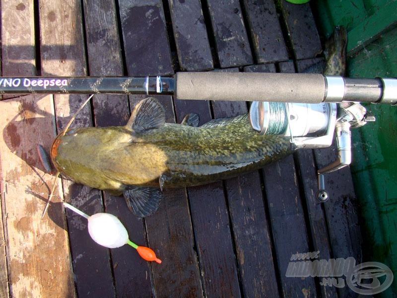 Örök dilemma, egy ekkora halhoz túlbiztosított ez a kombináció…