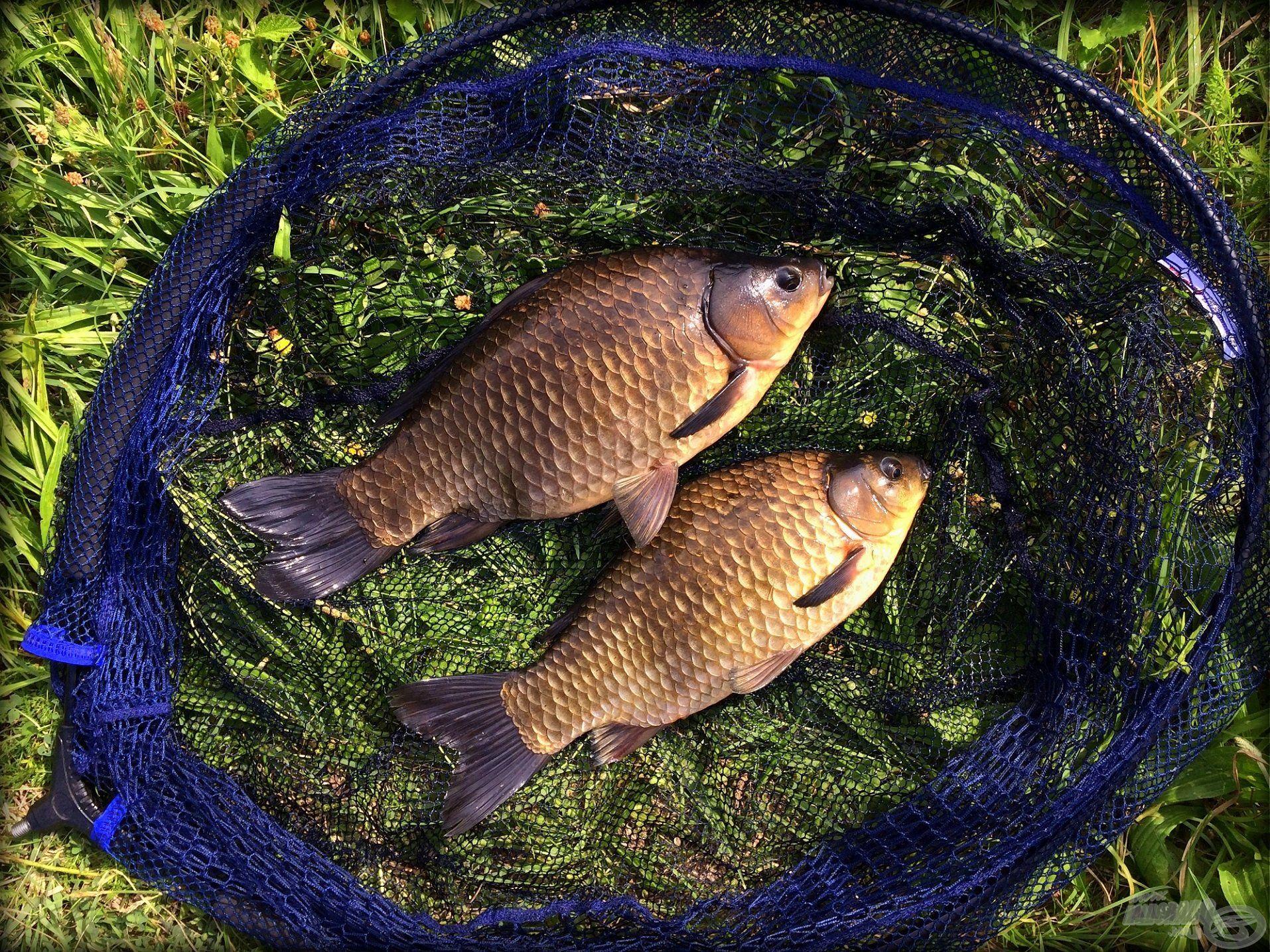 Etetés nélkül is lehet halat fogni