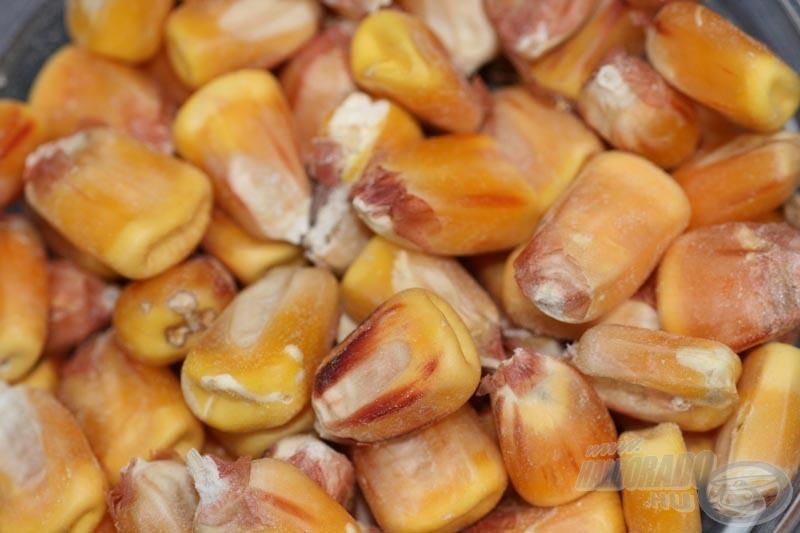 A takarmányboltban kapható állapotú kukorica…