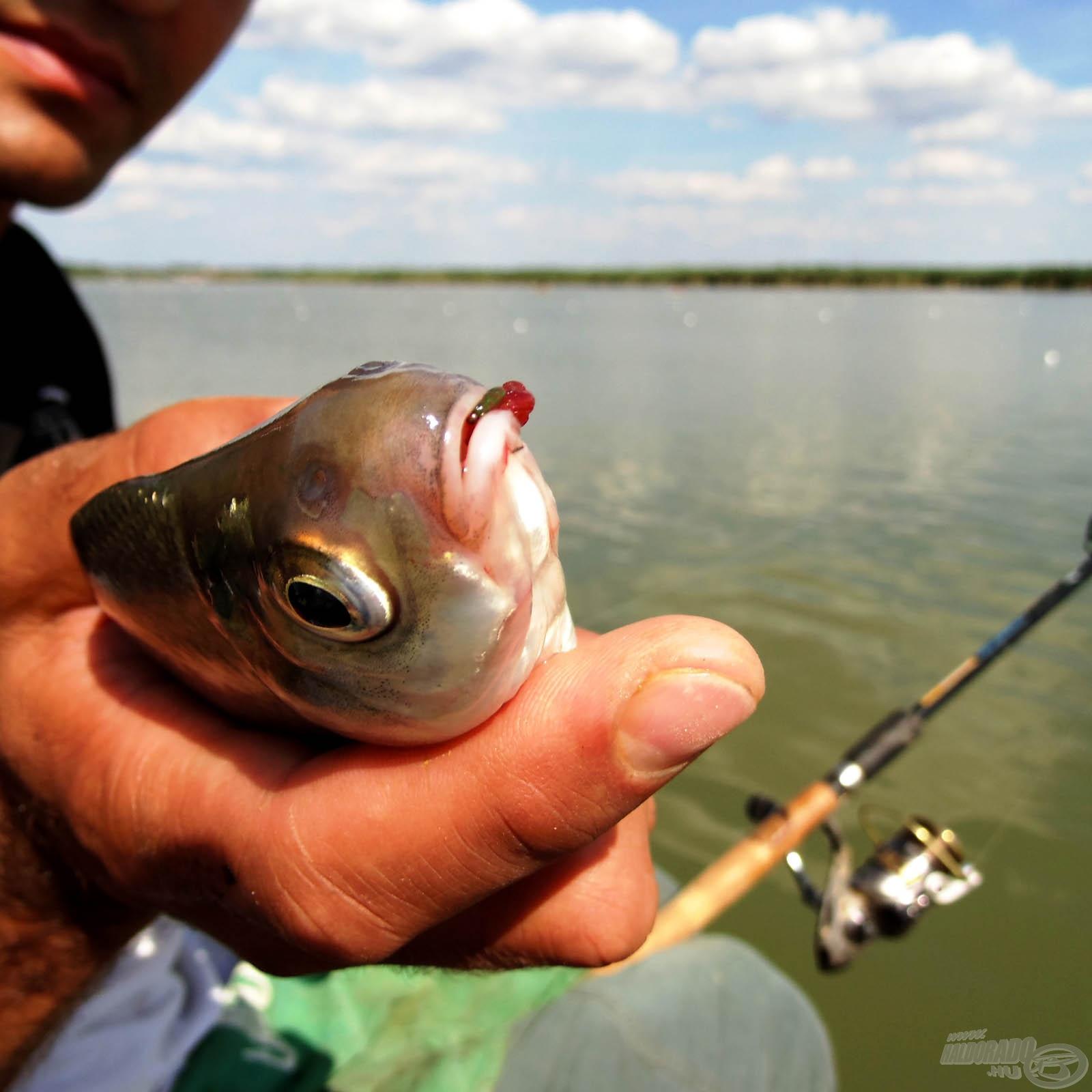 Békés halak