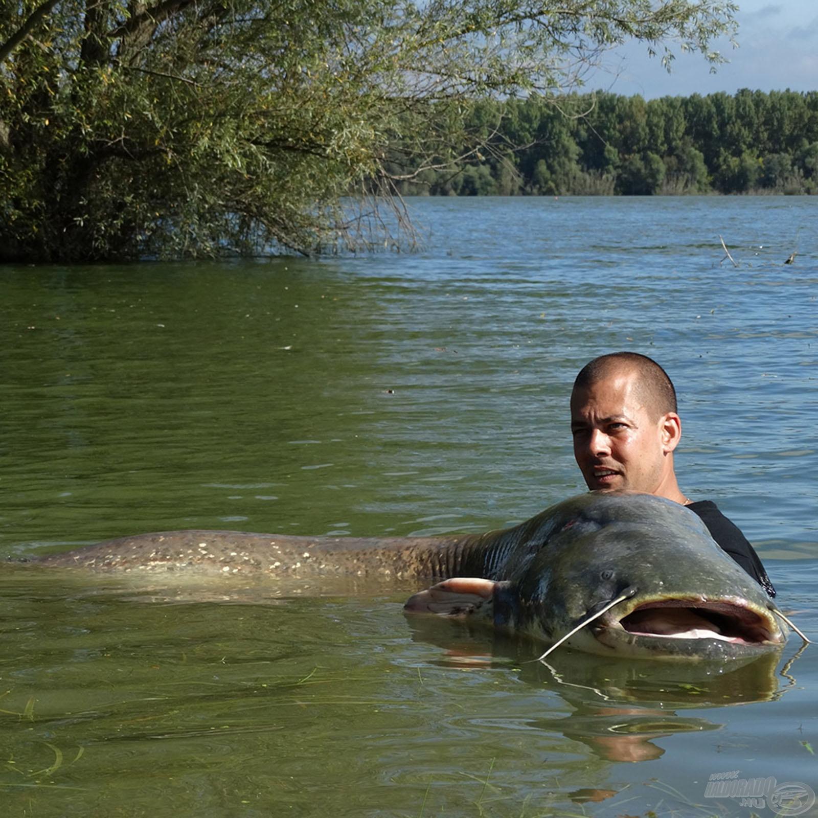 Harcsa horgászat