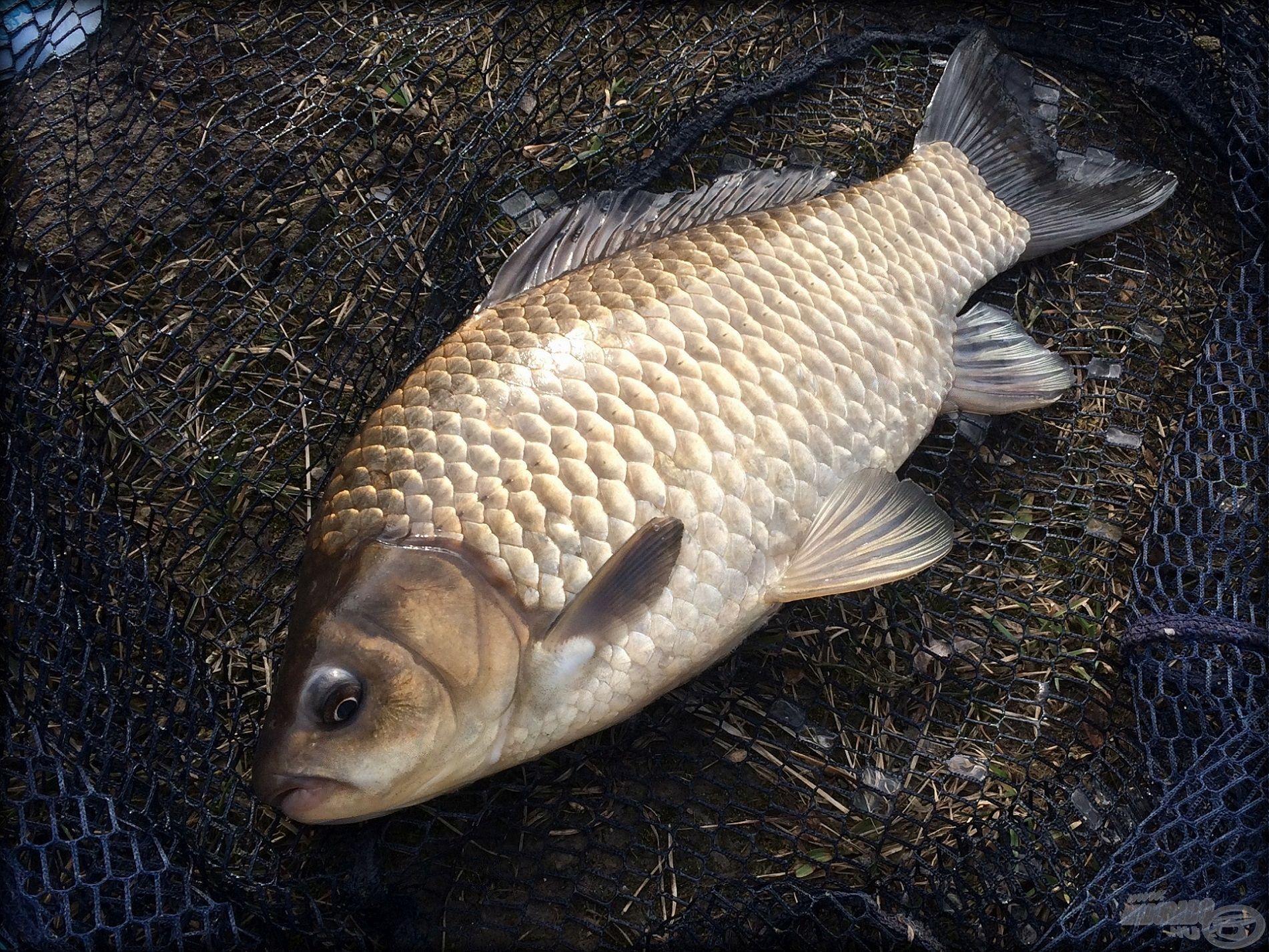 Egy élmény a peca télen, ha ilyen halak jönnek