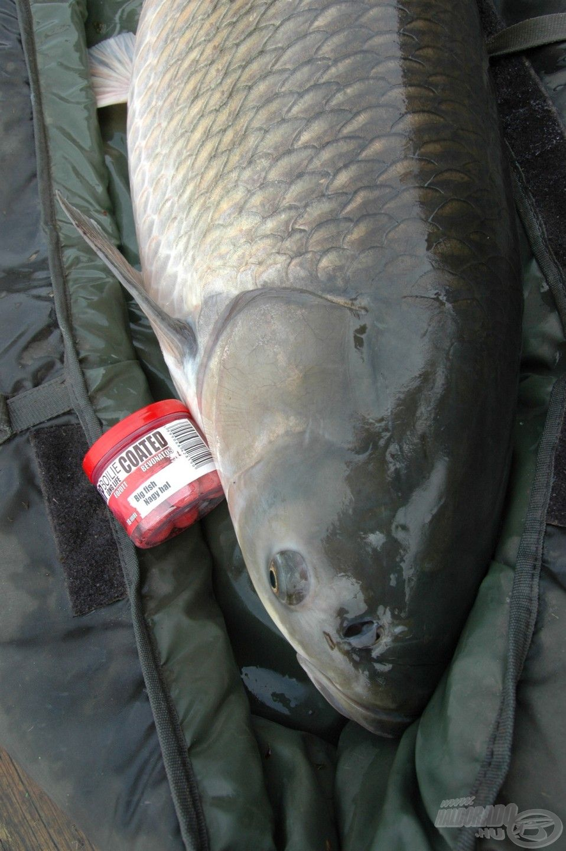 A Big Fish bojlira is rendszeresen elcsábulnak