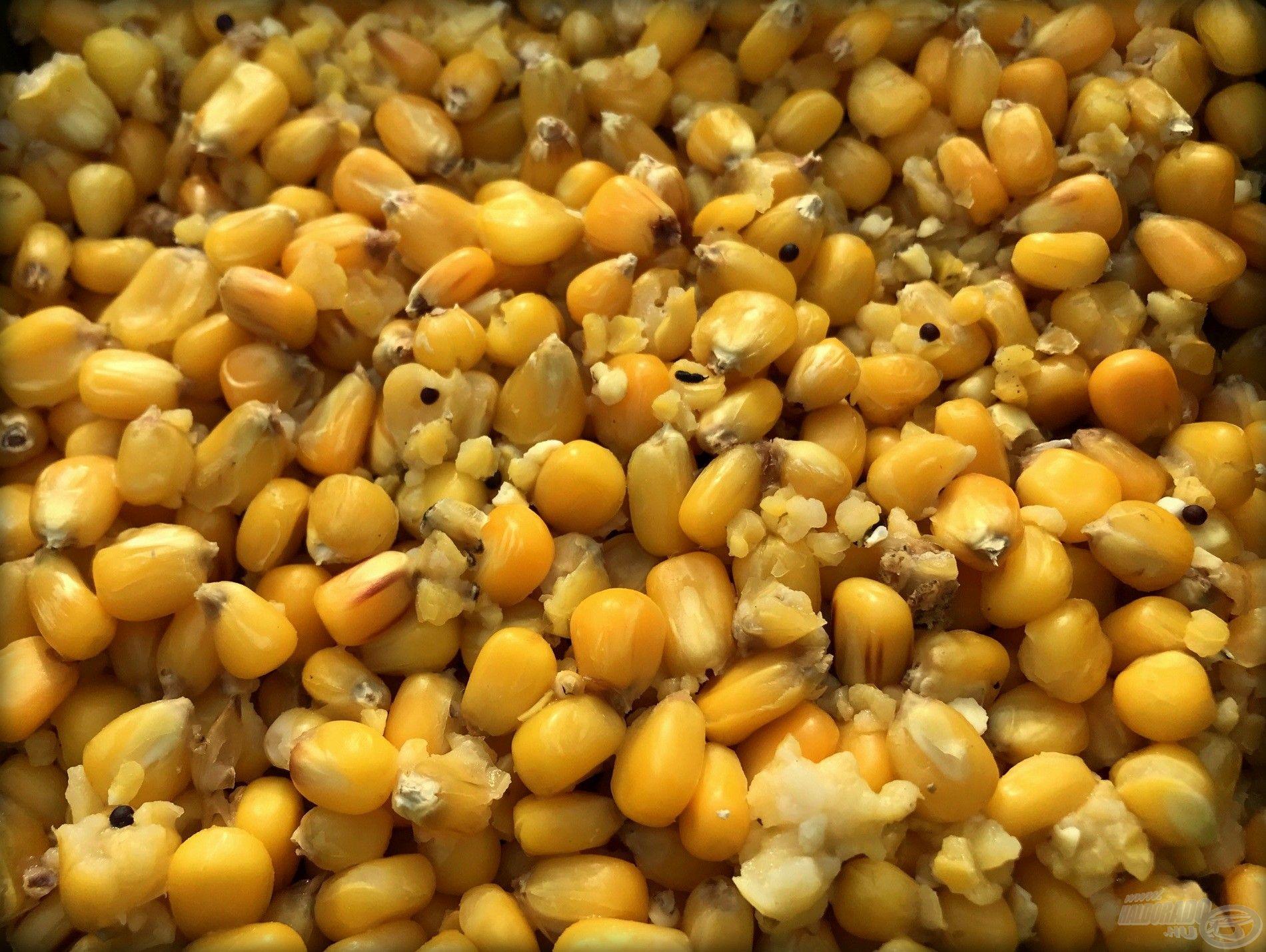Frissen főtt takarmány: megunhatatlan az amurok számára