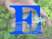 """Angol-magyar horgászszótár 5. rész """"E"""""""
