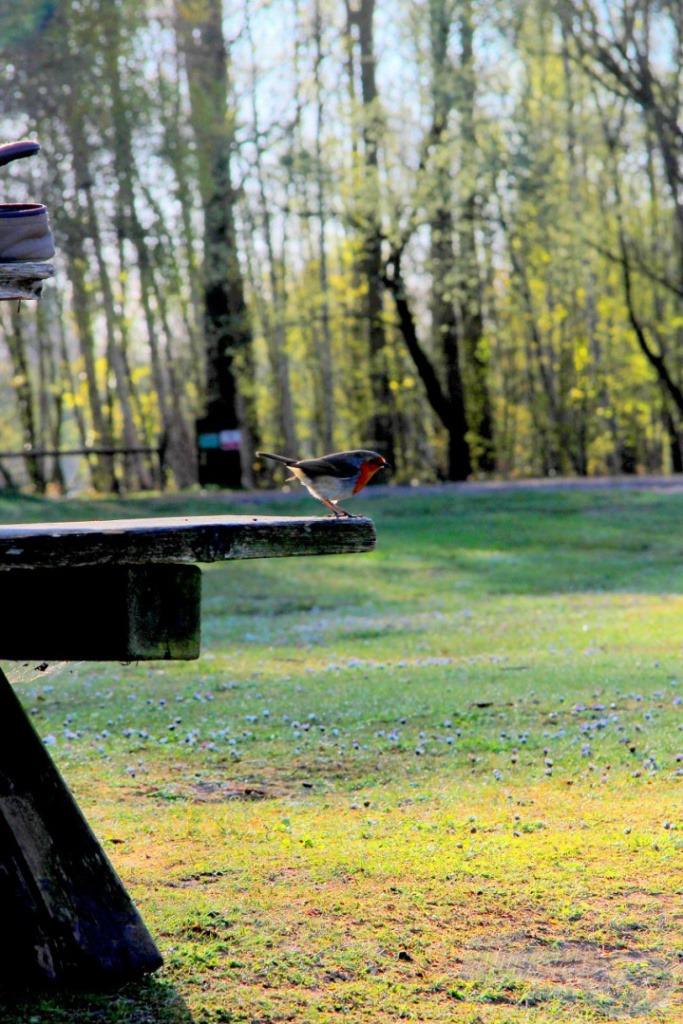 Ez az apró madárka is nekünk szurkolt