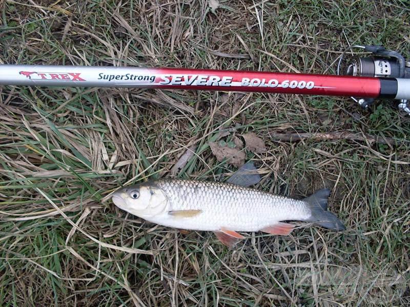 Az első és egyben utolsó halam…