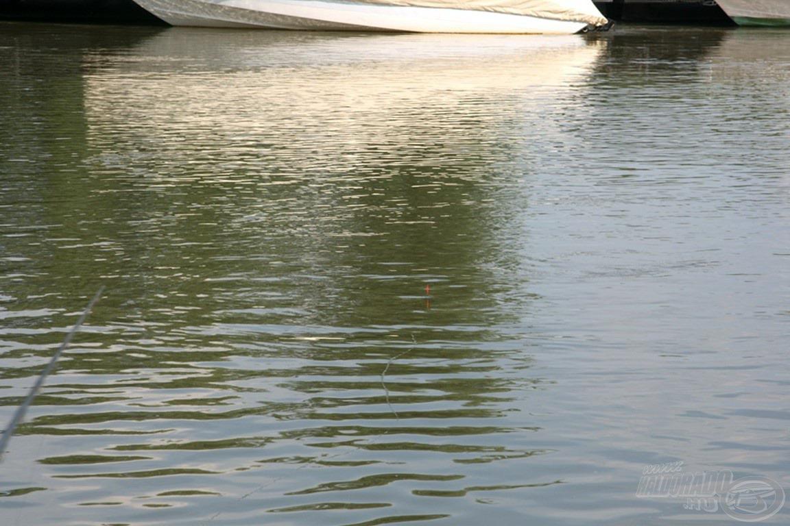 Az úszó, mikor beállt. Ritka látvány volt ennyire zavartalanul. Hol az akadók, hol a halak húzták le