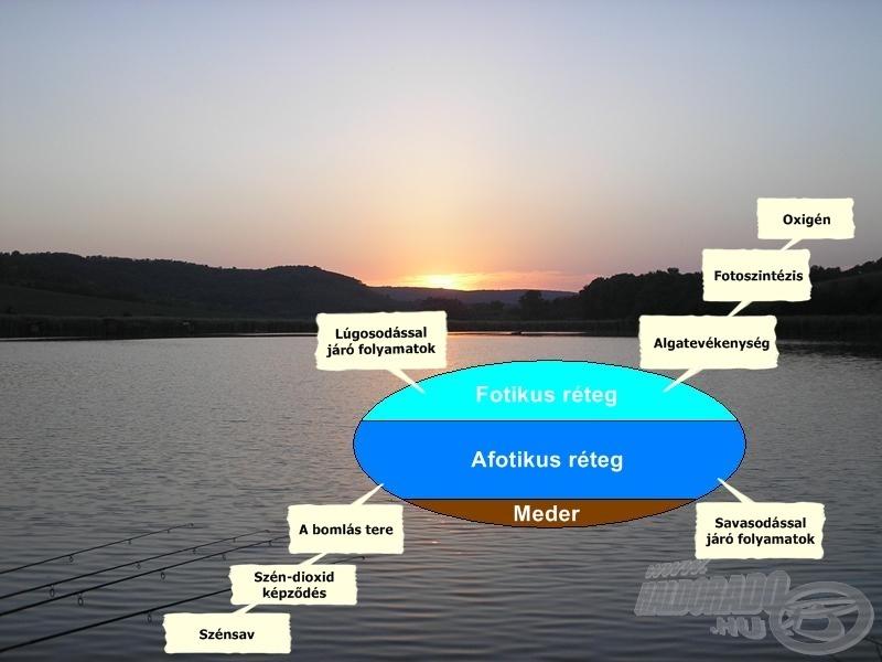 A vízrétegek feloszthatósága az átvilágítottság alapján, valamint az egyes rétegek főbb ismérvei