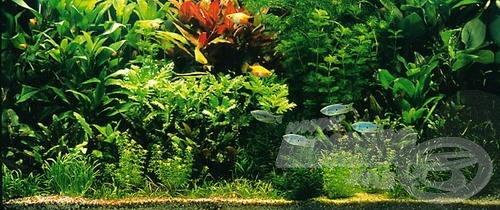 Holland stílusú akvárium