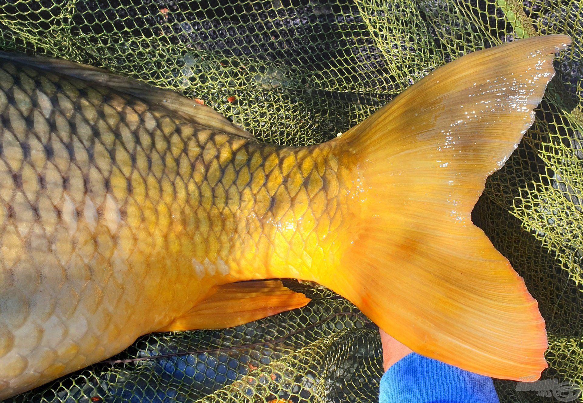 Nem lepődtem meg a hal erején, ekkora evezőkkel azért lehet menetelni a vízben