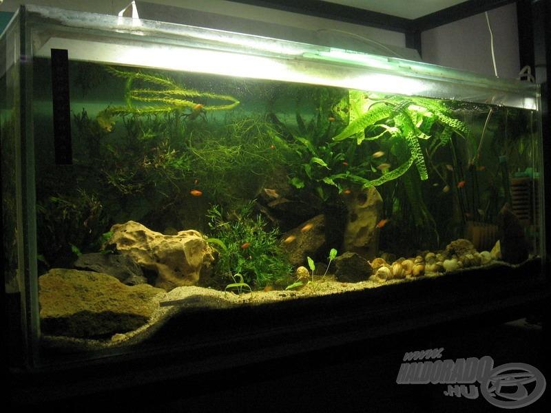 Nincs annál jobb, ha otthon is halak veszik körül a horgászt, csak legyen elég akvárium