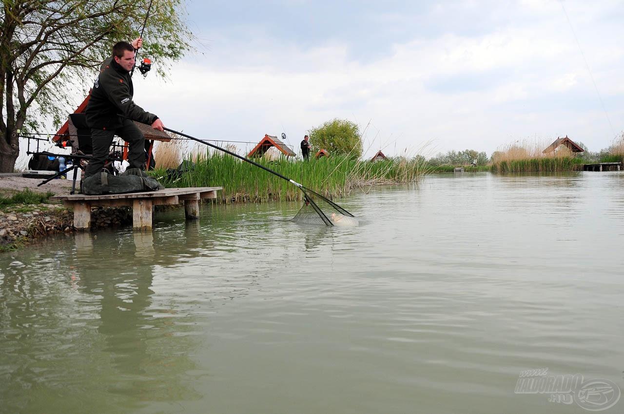 A karcsú, mégis masszív és rugalmas bot néhány percen belül felőrölte a hal erejét