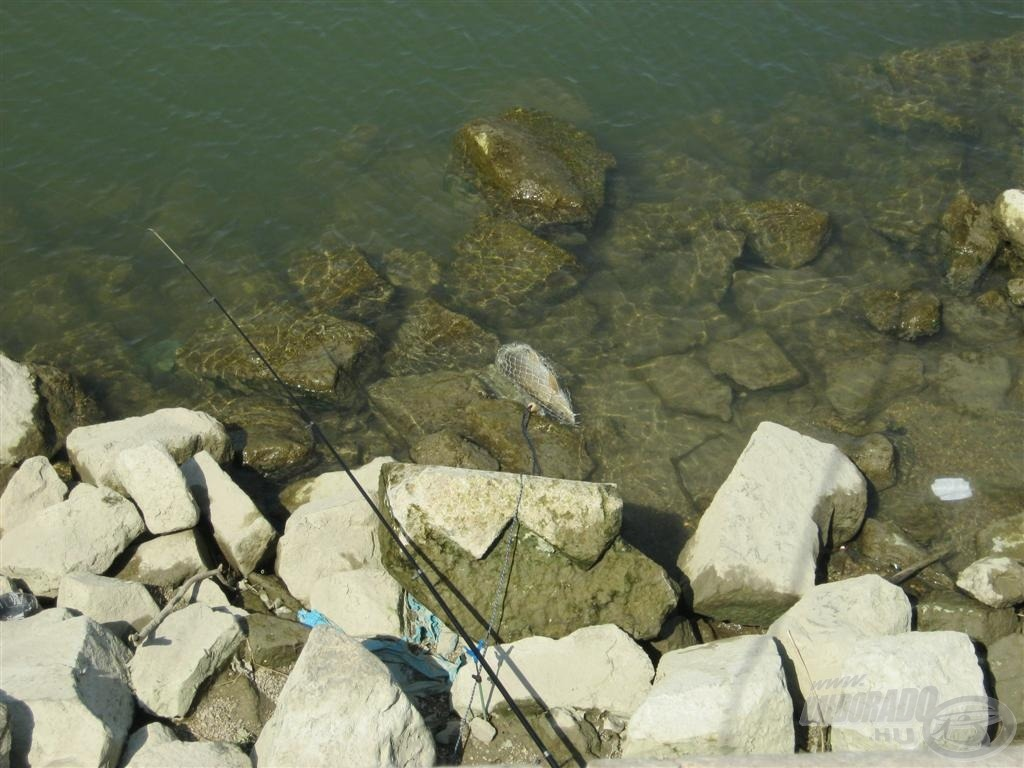 Össze kell fogni, hogy a maradék hal ne így végezze!