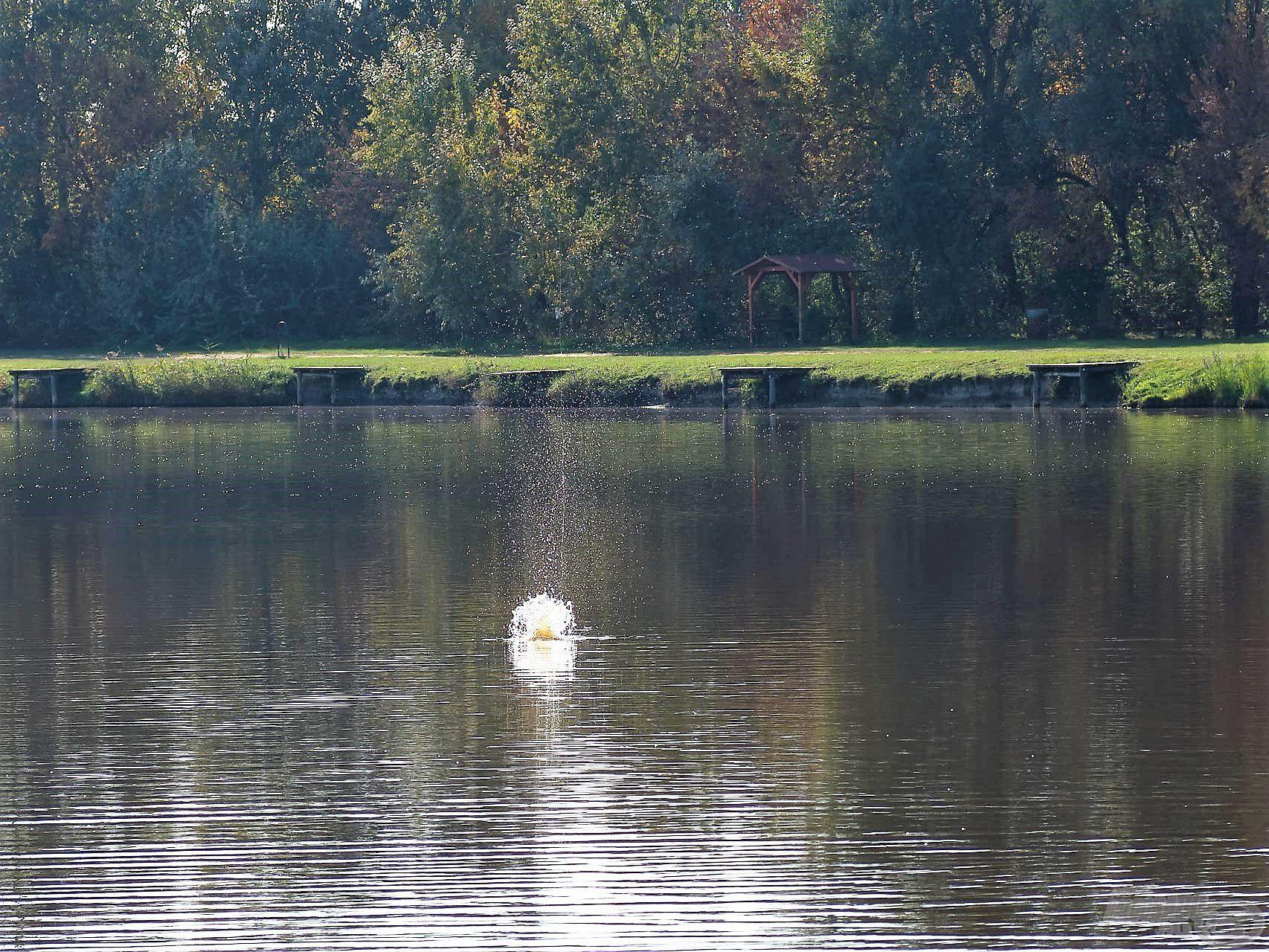 A Vad Ponty kaja egy része már becsapódáskor kiszabadult a kosárból, és a nagy fehér felhő messziről utat mutatott a halaknak