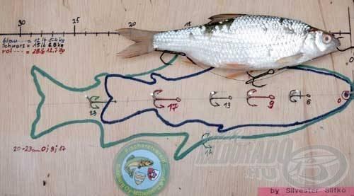 Szilveszternek különleges, de egyben nagyon praktikus horogkötő mérettáblája van, a különböző méretű csali halakhoz
