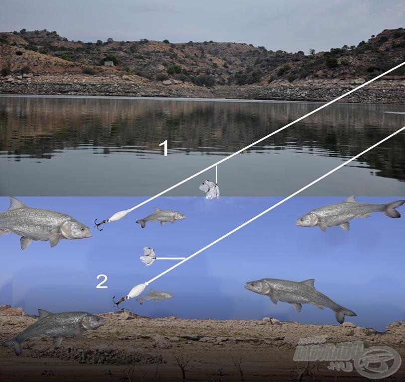 Íme, a balinólmos-műlegyes együttes két vezetési módja: az egyessel jelölt készség a feszíni vezetését mutatja - itt arra kell ügyelnünk a bevontatásnál, hogy a légy a vízfelszínen táncoljon. A kettessel jelölt módon alkalmazott szerelékkel kedvünk szerint pásztázhatjuk át a vízoszlopot (és ha megvannak a balinok, akkor érdemes elővenni a Thrillt)