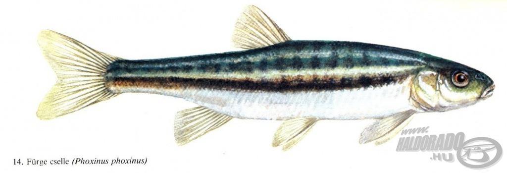 A horgászvizsgán már ismerni kell a hazai halakat