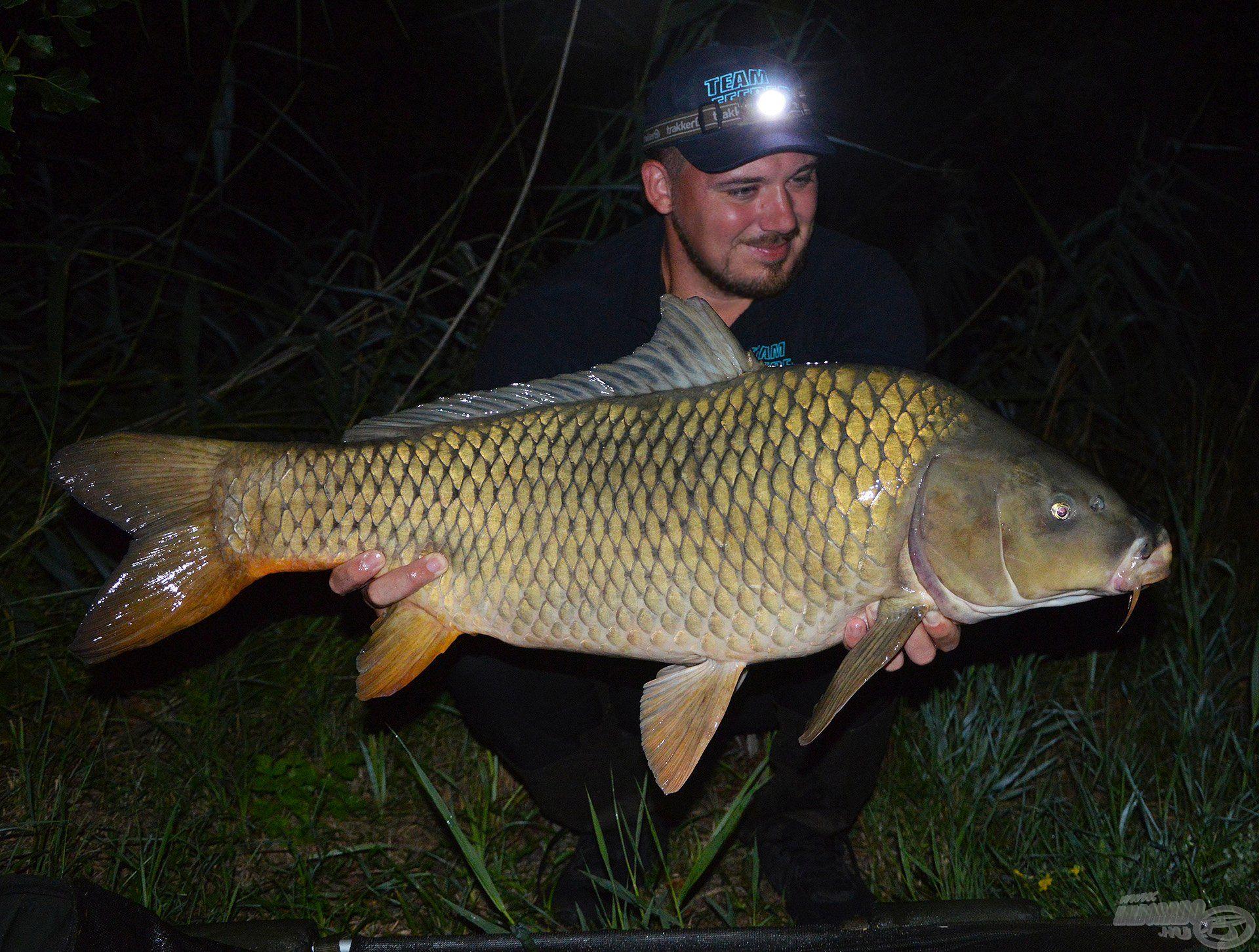 A nagyhalas feederhorgászat egyik legjobb időszaka az éjszaka! Ha tehetitek, akkor horgásszatok minél többet, akár éjszaka is, a nyárból még van hátra bőven, hajrá!